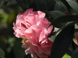 Lingering Gardens, Suzhou