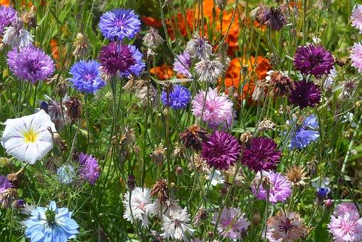 flowers-1641322__340-pixabay